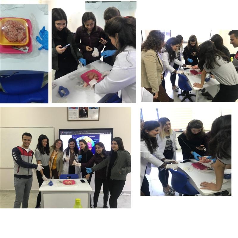 Biyoloji dersinde beynin yapısını inceleyen öğrencilerimiz....