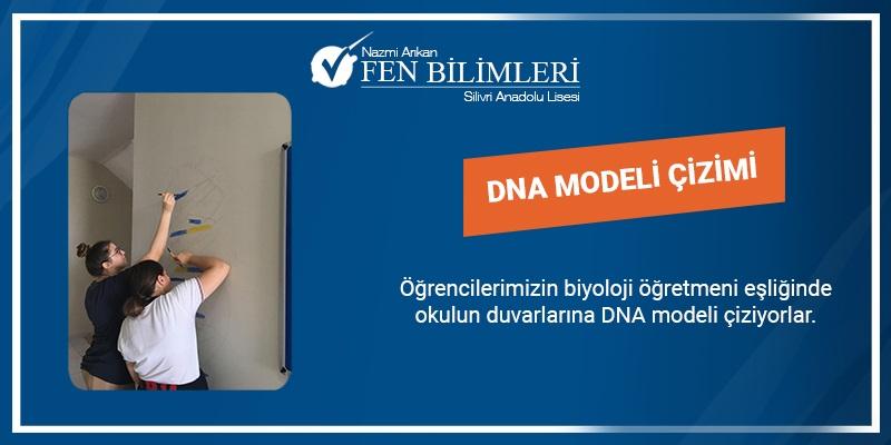 DNA MODELİ